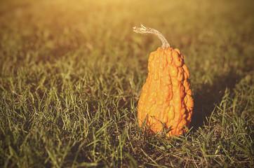 Vintage photo of a ripe pumpkin