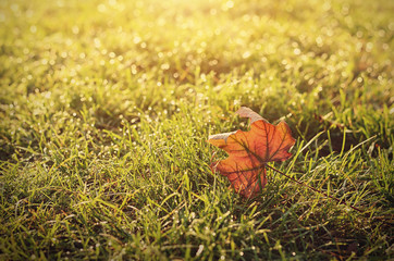 Vintage photo of autumn leaf on field at sunset