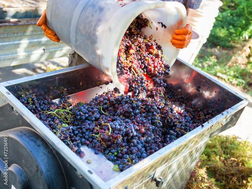 making wine - 72516493