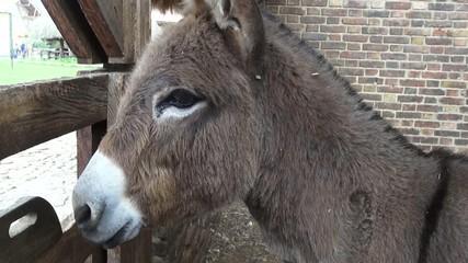 Donkey, Mules, Farm Animals
