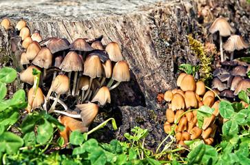 funghi in quantità