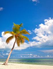 Palm trees on the beach in Key West Florida
