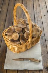 Cesta con setas de cardo silvestres frescas recién recolectadas