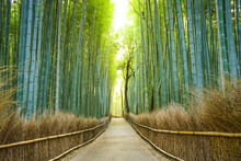 Kyoto, Japon Bamboo Forest