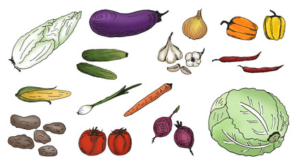 Colored hand drawn vegetables