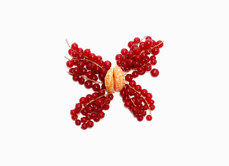 Red currant butterfly