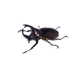 Beetle with white background