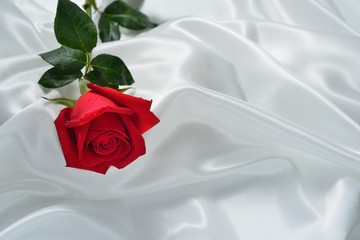 Red rose flower on white cloth
