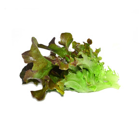 Lettuces with white background