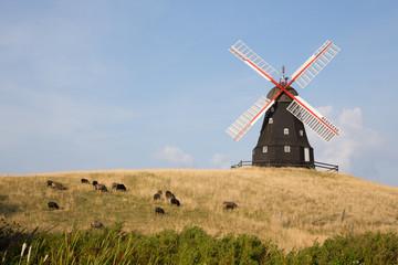 Mühle und Schafe