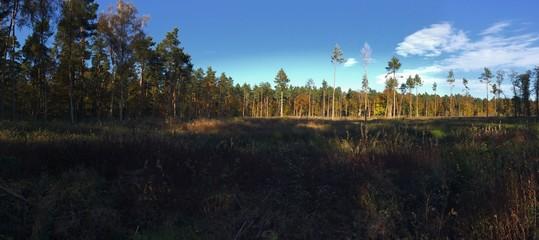 Wald im Panorama