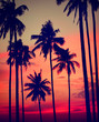 Silhouette Coconut Palm Tree Outdoors Concepts