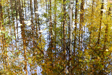 autumn forest reflected in a pond