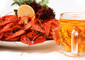 Plate with red boiled crayfish and herbs. Beer
