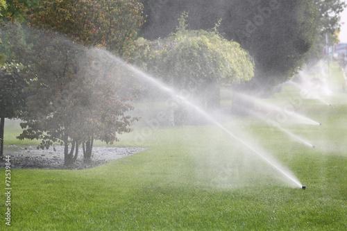 Papiers peints Arbre Lawn Sprinkler Spraying Water Over Green Grass in Garden