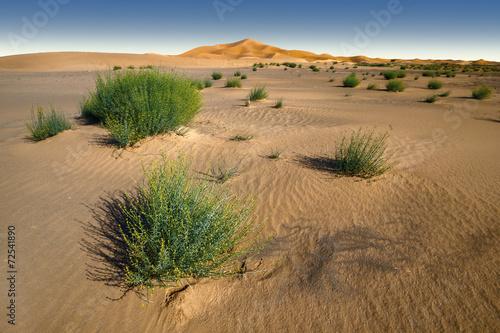 Zdjęcia na płótnie, fototapety, obrazy : Amazing panoramic view of Sahara desert in Morocco