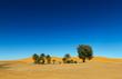 Oasis in the Sahara desert in Morocco - 72542099