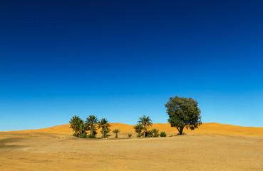 Oasis in the Sahara desert in Morocco