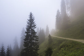 Forest in a foggy day