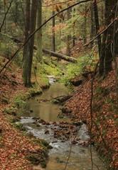 Amselbach im Nationalpark Sächsische Schweiz