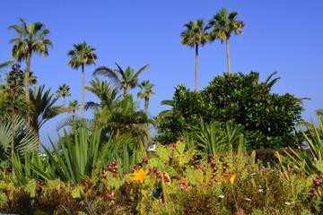 Vegetación exótica en Puerto de la Cruz. Tenerife