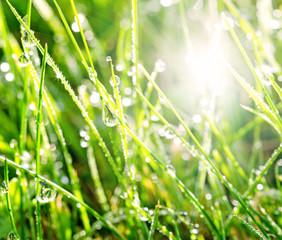 Gras mit Morgentau :))