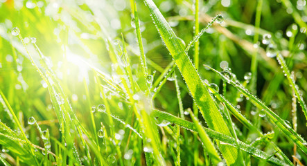 Gras mit Morgentau :)