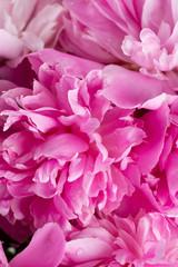 pink peony background