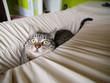 Cat hidden in a linen
