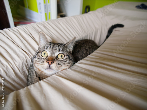 Foto op Plexiglas Kat Cat hidden in a linen