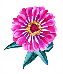 Bright pink flower botanical watercolor