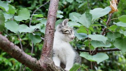 littel kitten play on branch of tree