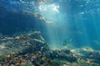 Rays of light underwater on a reef with fish