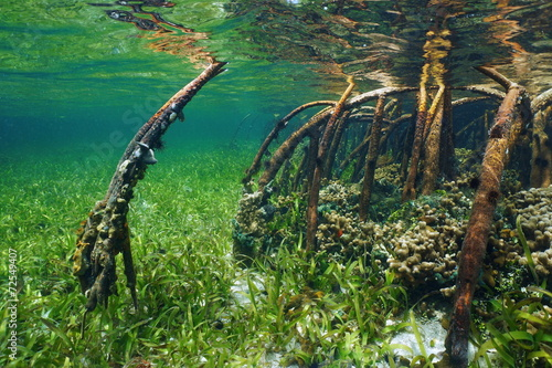 Poster Water planten Mangrove underwater with sea life in the roots