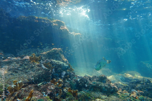 Rays of light underwater on a reef with fish - 72549431