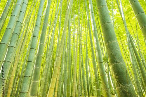 Foto Spatwand Bamboe Bamboo Forest in Japan. Bamboo Groove in Arashiyama, Kyoto.