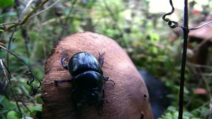 Beetle on mushroom