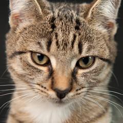 Katzenkopf im Quadrat