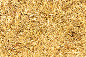 Hay dry grass seamless background