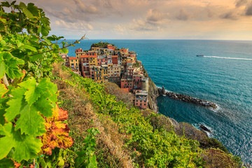 Vineyard and old town of Manarola,Italy,Europe