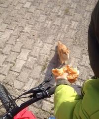 aç kediye ekmek veren çocuk
