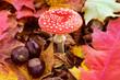 Herbst - Fliegenpilz