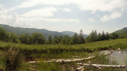 panorama of mountain bogs in which lie the old birch