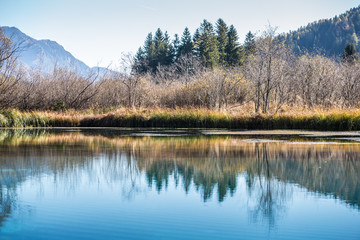 Trees and blue sky reflected in a tranquil lake