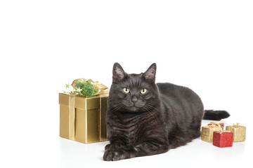 Katze und Weihnachten