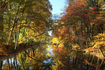Autumn at the forest of central New Jersey State