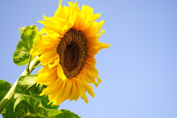 Ecology flower