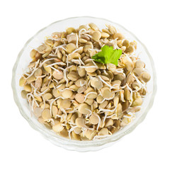 Sprouted green lentils in a glass salad bowl.