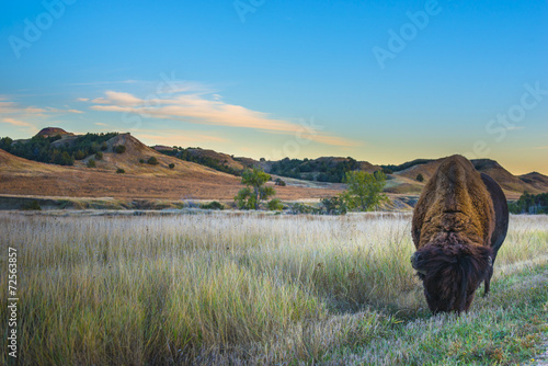 Staande foto Buffel Badlands Bison