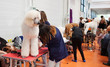 canvas print picture -  Poodle and their owners at  exhibition